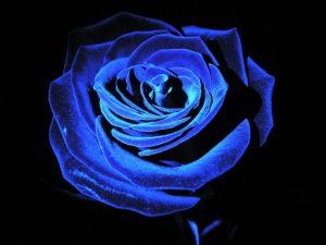 Как покрасить розу на подарок?