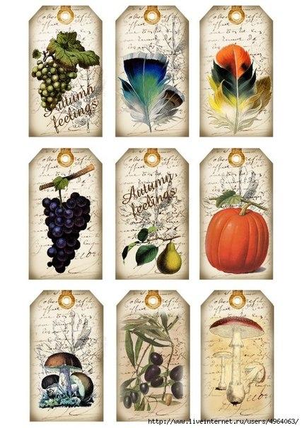 Теги с фруктами и овощами