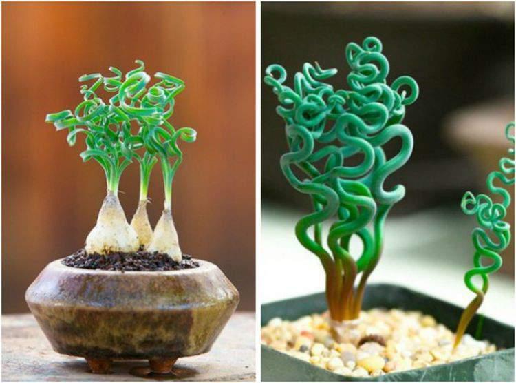 Экзотические растения на подарок.