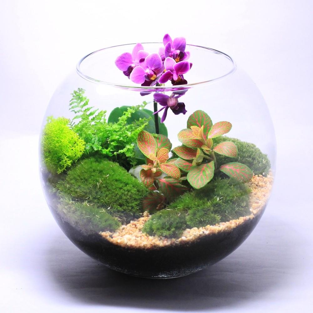 Растения в подарок