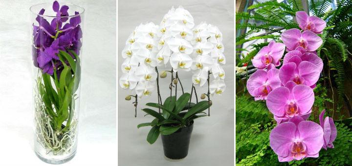 Орхидеи в подарок