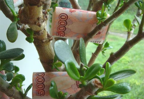 Как подарить денежное дерево